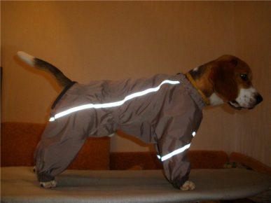Собака в костюме со светоотражающими полосами