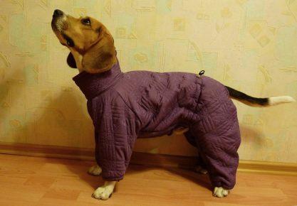 Собака в костюме для поздней осени
