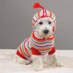 Собака в полосатом вязаном костюме