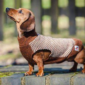 Пёсик в костюме из старого свитера