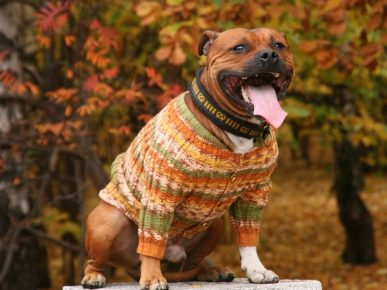 Собака в кофте с застёжкой на пуговицы