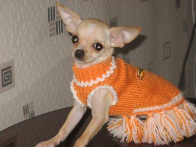 Собака в красивом оранжевом свитере