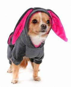 Собака в костюме с ушками
