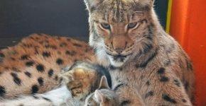 Алена воспитывает четырех котят