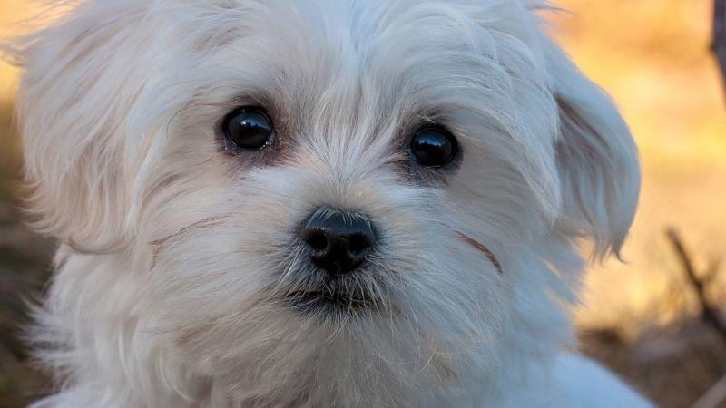 Лучшая собака для пожилого человека. Краткое описание пород