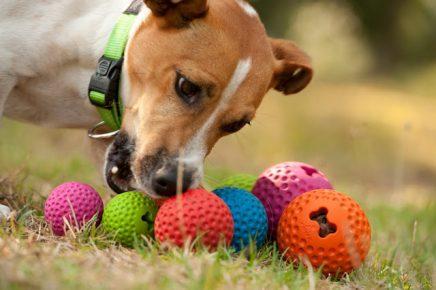 Собака играет с разноцветными мячиками