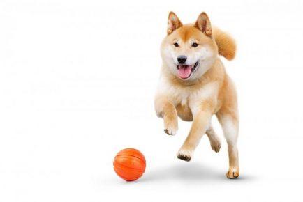 Собака бежит за оранжевым мячом