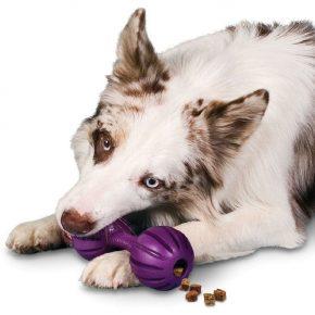 Собака и игрушка с лакомством