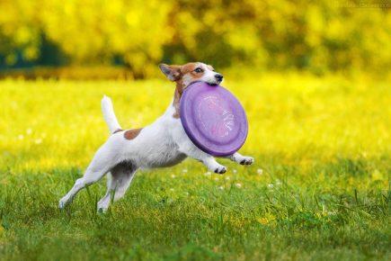 Собака с летающий тарелкой в зубах