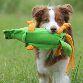 Пищащая игрушка в зубах у собаки