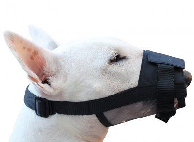 Собака в груминговом наморднике
