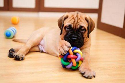 Собака с забавным мячом