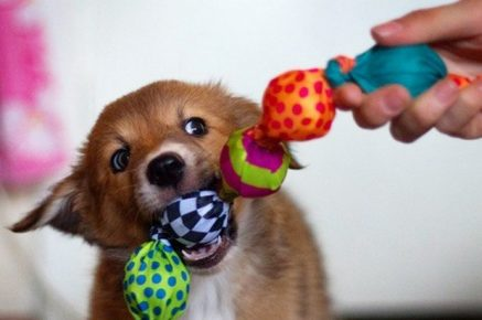 Собака со специальной игрушкой