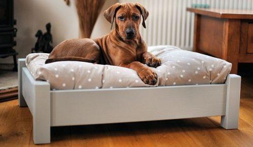 Кровать-лежанка для собаки