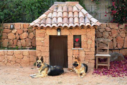 Овчарки охраняют двор