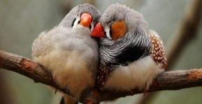 Птицы переполошили Миннесоту