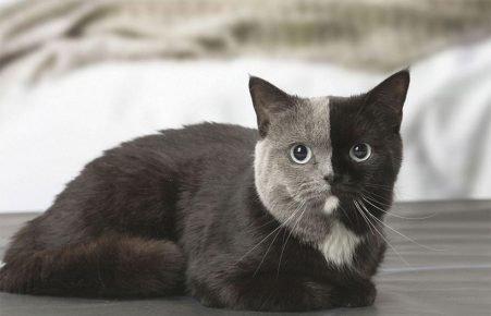 Нарния — кошка с двумя лицами