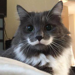 Усатый кот — джентльмен