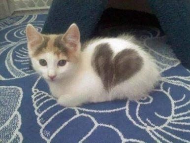 Кошка с сердечком на боку