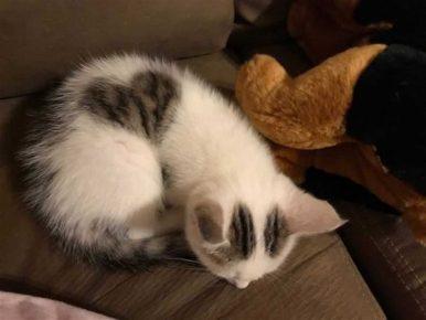 котёнок с сердечком на спине