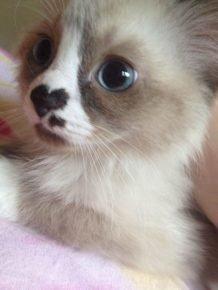 Котенок с сердечком на носу