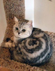 Кошка-улитка