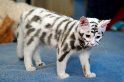 Котёнок с тигровыми полосками