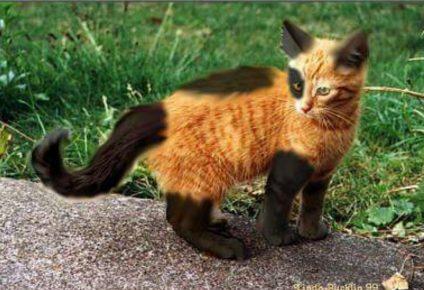 Рыжий котёнок
