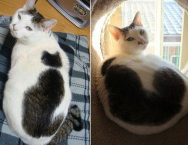 Кот на спине кота