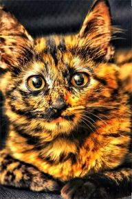 Кот с огненной окраской