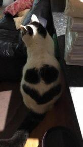 Кот со смайликом на спине