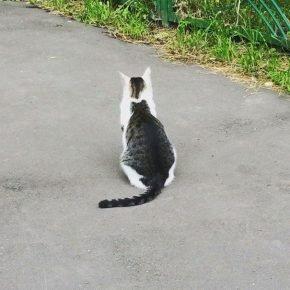Кошка на спине кошки
