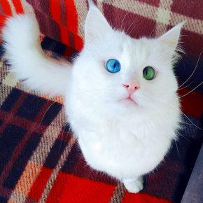 Кот с необыкновенными глазами