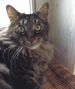 четырехглазый котик