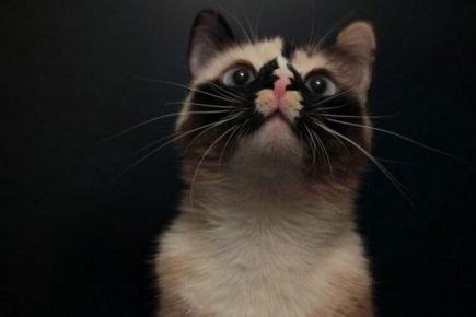 Котик со звездочкой на носу