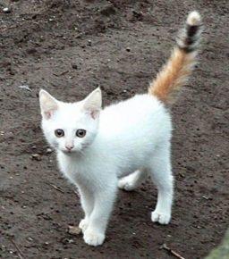 Котик с цветным хвостиком