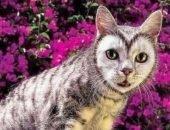 необычные окраски кошек