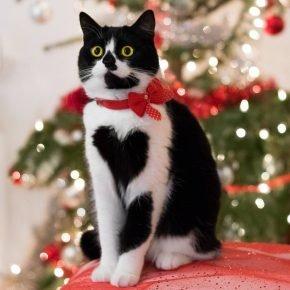 Кошка с сердечком на груди