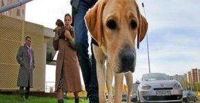 Инвалида не пустили в магазин с собакой-поводырём
