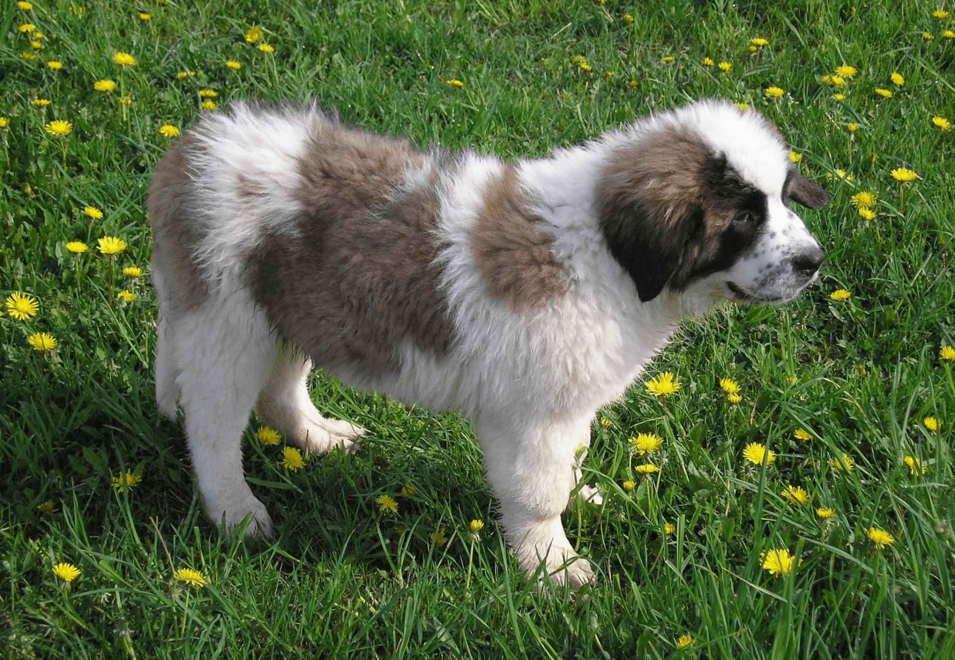 Сторожевые собаки картинки