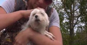 Спасение собаки после наводнения