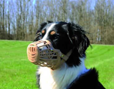 Собака в пластиковом наморднике