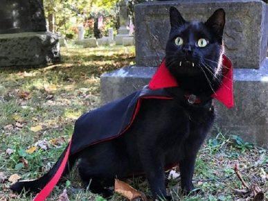 Кот-Дракула на кладбище