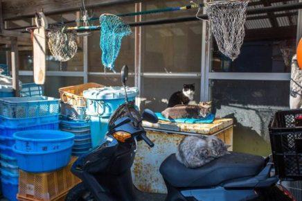 коты и рыболовные сети