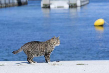 кошка на берегу