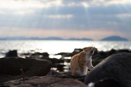 кошка у моря