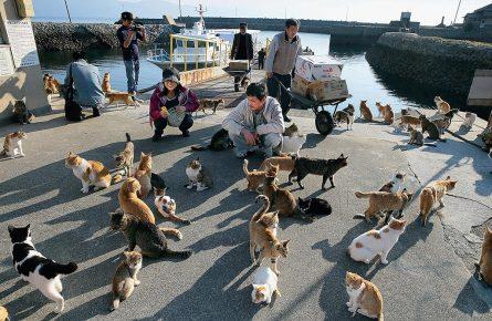 туристы и кошки