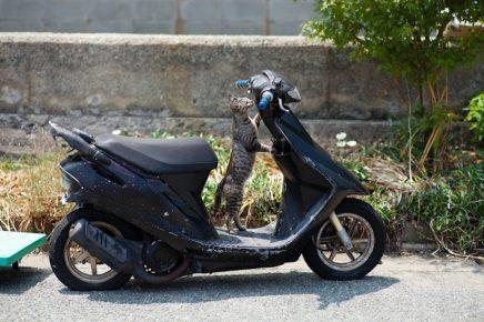 кот на скутере
