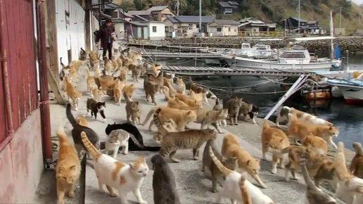 кошки на улицах Таширодзимы