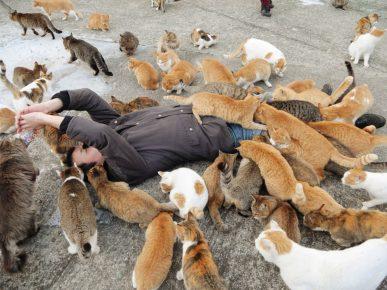 Туристы с кошками
